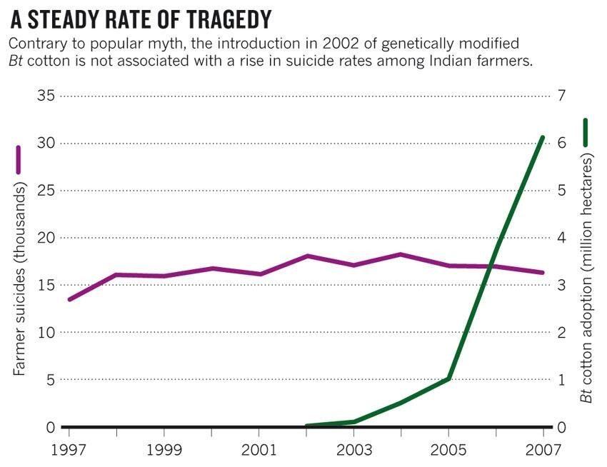 La ligne pourpre indique le nombre de suicides des agriculteurs en Inde tandis que la ligne verte indique l'adoption du coton BT